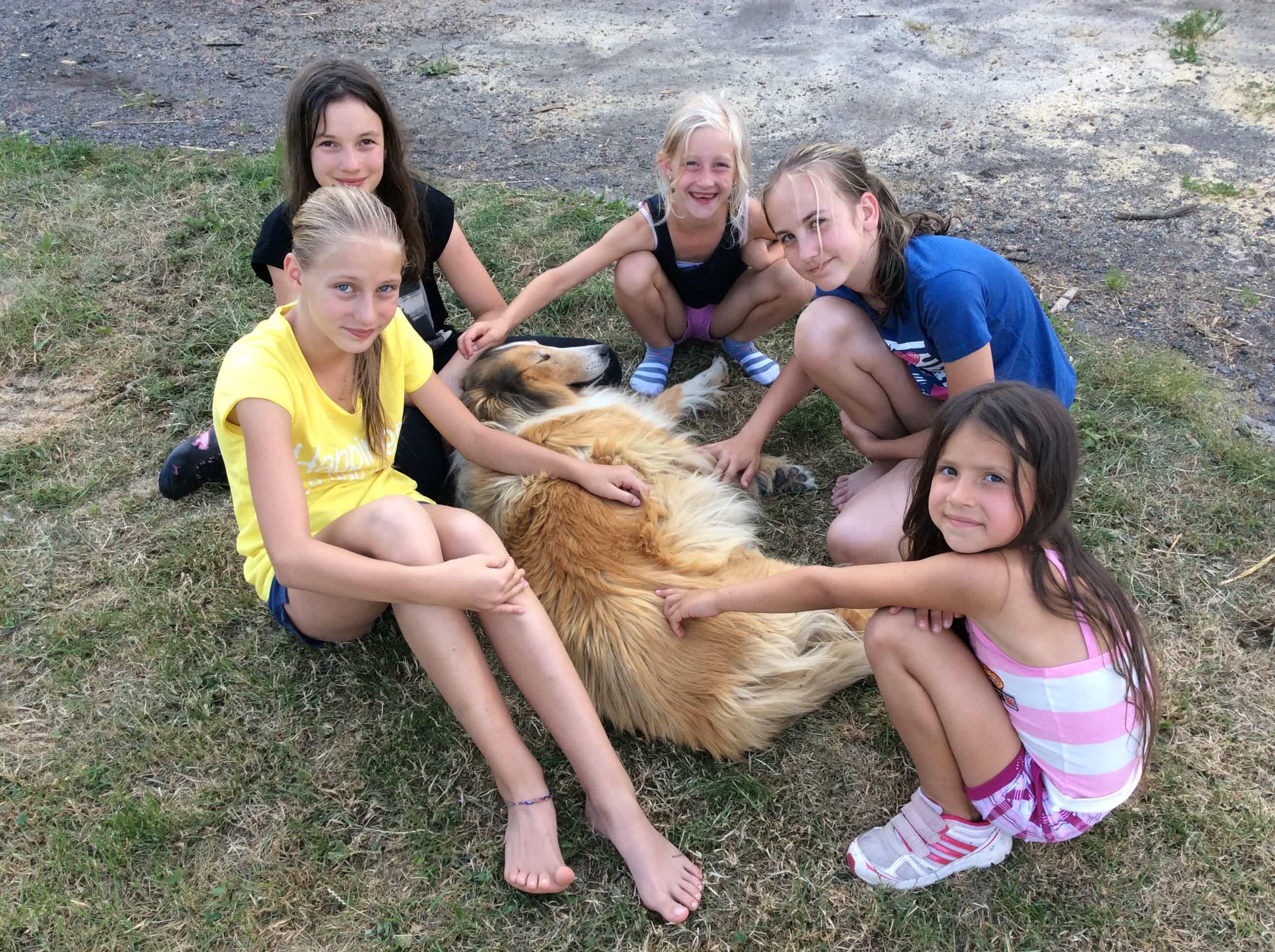 tábor se psy - psí tábor trhová kamenice pardubický kraj